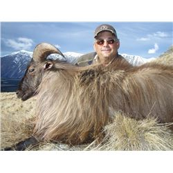 New Zealand Himalayan Bull Tahr Offered by: New Zealand Custom Outfitters