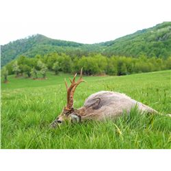 Serbia Roe Deer Hunt Offered by:  Safari Art
