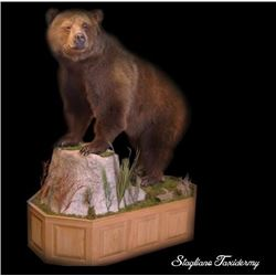 $250 Taxidermy Gift Certificate donated by Stagliano Taxidermy
