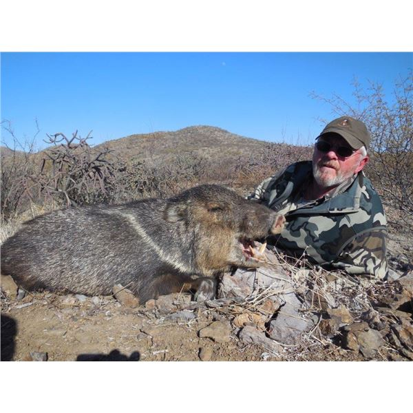 Arizona, USA One hunter for 3 Day Javelina Hunt