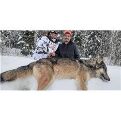 Ontario Trophy Wolf Hunt