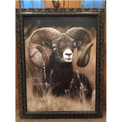 Bighorn Ram SCI Artist of the Year Canvas Giclee