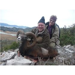 Croatia Mouflon Sheep and Balkan Chamois Hunt