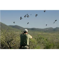 Four Day Argentina Dove Hunt for Four Shooters