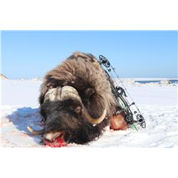 Nunivak Island Bull Muskox Special Permit