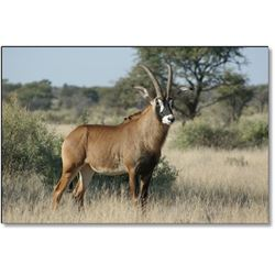 Roan Antelope Hunt with Numzaan Safaris