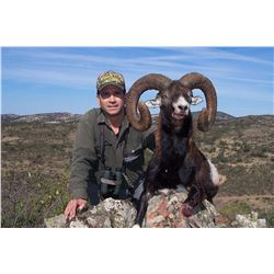 Four Day Red Stag or Mouflon Sheep Hunt in Spain