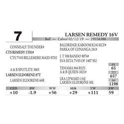Larsen Remedy 16V