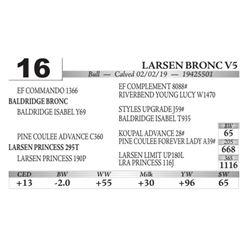 Larsen Bronc V5