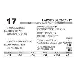 Larsen Bronc V12