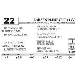 Larsen Powerade V113