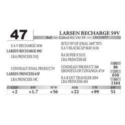 Larsen Recharge 59V