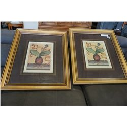 PAIR OF PLANT PRINTS