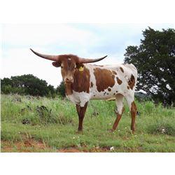 BG TRES COWBOY CHIC