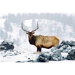 Elk/Deer/Antelope Wyoming State Commissioners' Licesnse - Wyoming Association of Predatory Animals
