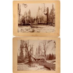 Two Mounted Photographs of Plumas County Lumber Camp  (115606)