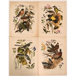 Artistic Prints of Birds from Arthur Singer Paintings  (115727)