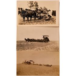 Three Real Photo Postcards of Farming  (111568)