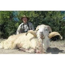 7 Day Argentinian Hunt for 2 Hunter –    TX Dall Ram, Wild Boar & Hybrid Sheep