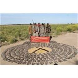 Argentina Dove Hunt for 4 to 12 Hunters, 4 Days 3 Nights
