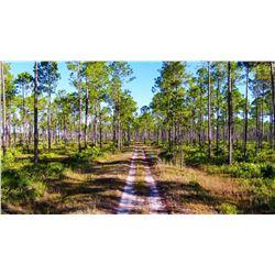 Florida ½ Day Quail Hunt for 2 Hunters