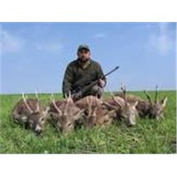 ROE DEER IN SERBIA HUNT for 2 hunters or 1 hunter and 1 observer