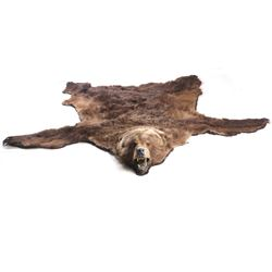 Alaskan Kodiak Bear Taxidermy Rug