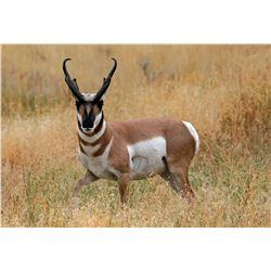 2020 Utah Box Elder/Snowville Buck Pronghorn Conservation Permit - Any Weapon Permit