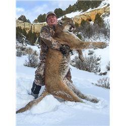 2020 Utah Central Mtns, Southeast Manti Cougar Conservation Permit