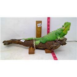 Iguana on Natural Wood Branch