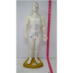 """Accupuncture Meridian """"Guide Doll"""""""