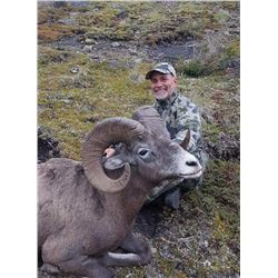Alberta Bighorn Sheep Hunt