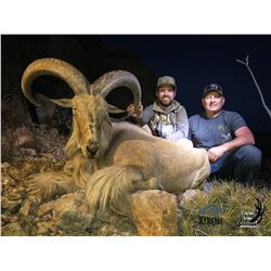 West Texas Aoudad Hunt Free Range