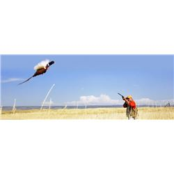 Premium SD NWTF Pheasant hunt for up to 3 hunters