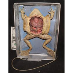 CABIN FEAVER 2 SCREEN MATCHED DISSECTED FROG PUPPET IN PAN