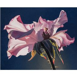 Ed Mell | Pink Rose