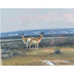 Michael Coleman | Two Pronghorn Antelope