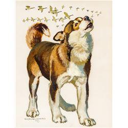 Robert Lougheed   Siberian Husky