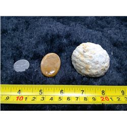 1 Fossil Coral - Specimen and Polished Cabochon