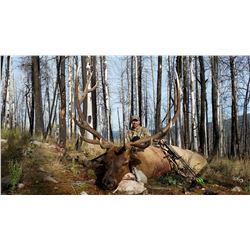 New Mexico: 5 Day Elk/Bear Combination Rifle or Muzzle loader hunt for 2 hunters.