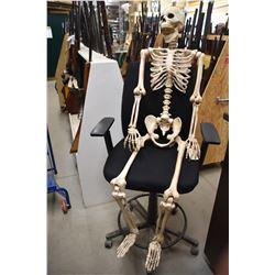 Plastic Human Skeleton