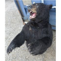 Black Bear Mount