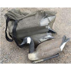 4 Canada Goose Decoys