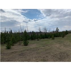 10 Trees - Balsam Fir and White Spruce 5' to 10' - Assorted