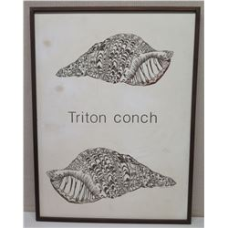 """Large Framed Art: 2 Shells """"Triton conch"""" on Canvas 31 x 41, Signed (canvas has faint brown spots)"""