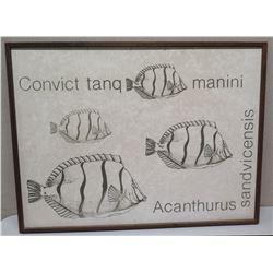 """Large Framed Art:  Fish""""Convict tanq, manini, Acanthurus sandvichensis"""" 41 x 31, Faded Signature, (c"""