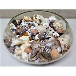 "Large Round Glass Bowl Filled w/ Various Seashells, 12.5"" Dia"