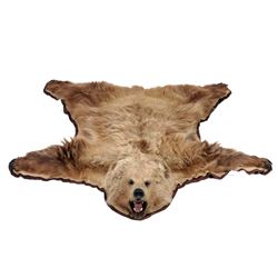 Kodiak Brown Bear Trophy Full Rug