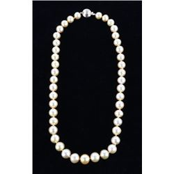 Golden South Sea Pearl 14K Gold Necklace