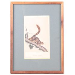 Bowen Lithograph Red Tailed Squirrel by Audubon
